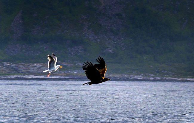 Foto Ufficio del turismo Capo Nord