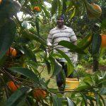 Turismo solidale con i bambini: raccogliere arance in Calabria