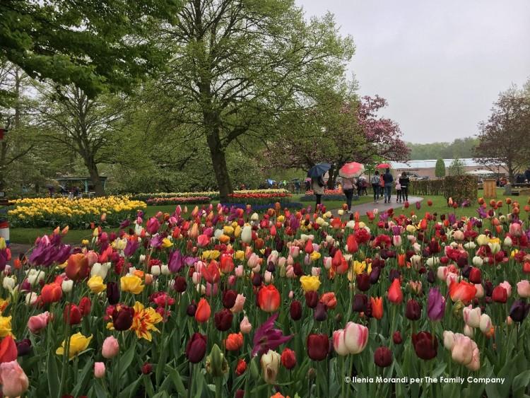 parco tulipani olanda
