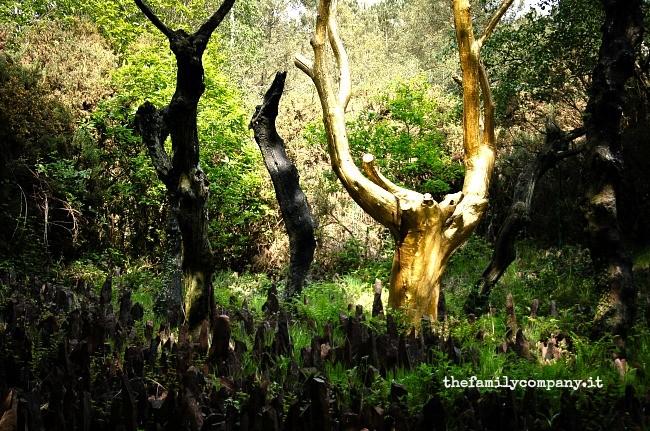 albero d'oro