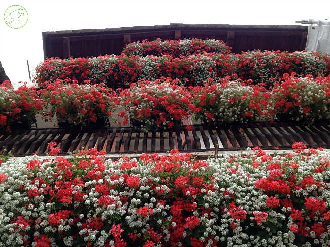 balconi fioriti cogne