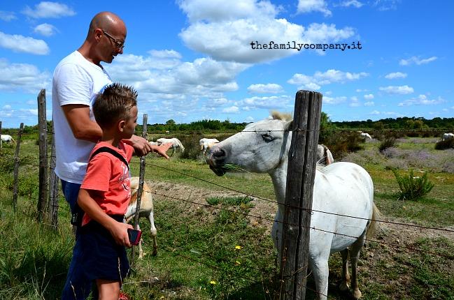 viaggio con bambini in provenza