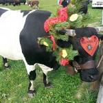 Desarpa Cogne: weekend nella natura tra amore e tradizione
