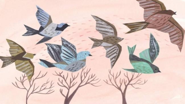 illustrazione uccelli