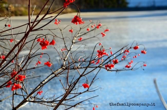 panorama renon invernale