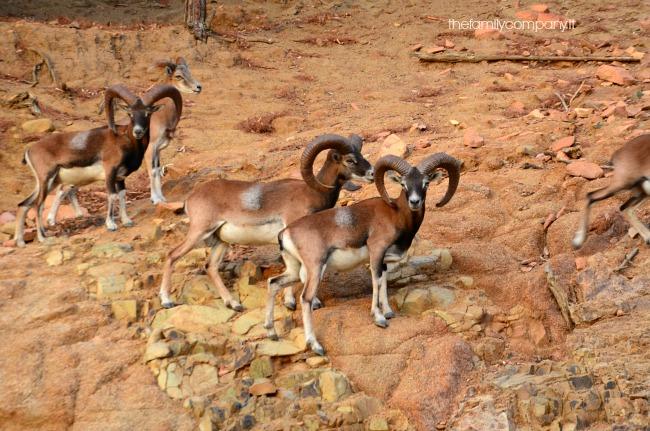 parco naturalistico arbatax 3