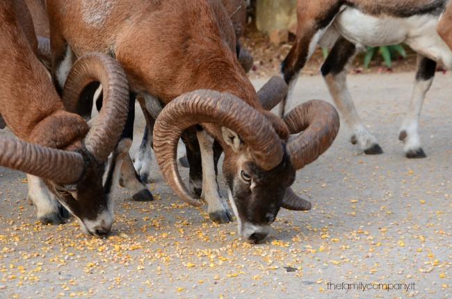 parco naturalistico arbatax animali