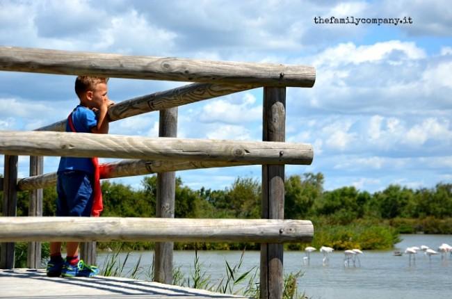 parco ornitologico camargue 3