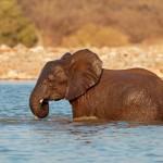 Namibia con bambini: ispirazioni di viaggio