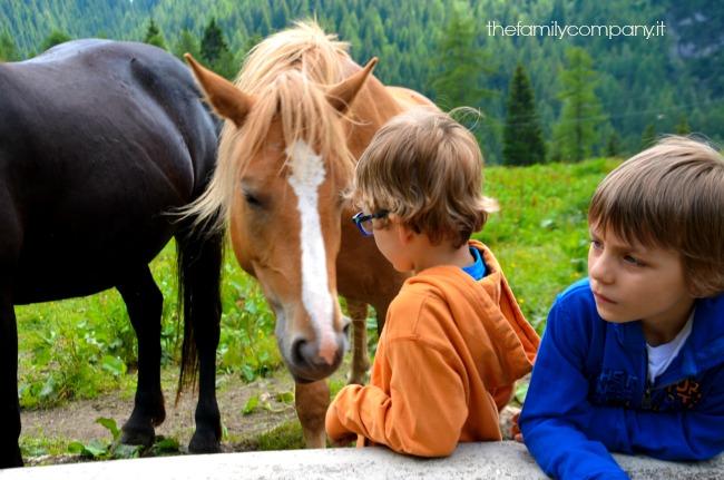 val di zoldo cavalli