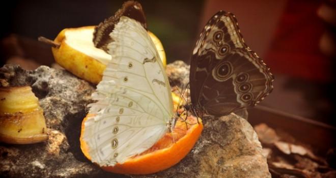 A casa delle farfalle