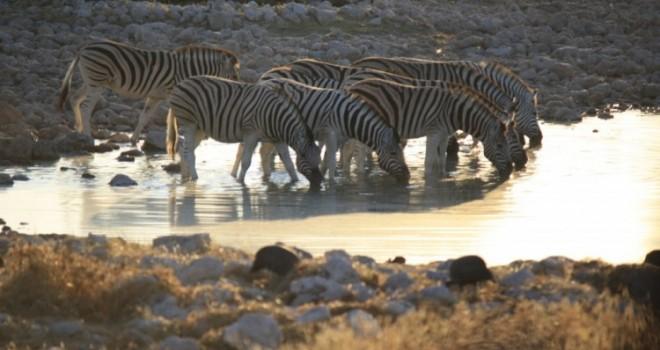 Safari con bambini in Namibia: il nostro diario di viaggio