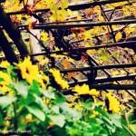 Alto Adige con bambini: weekend a Merano