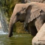 Un po' d'Africa in Spagna: il Bioparco di Valencia
